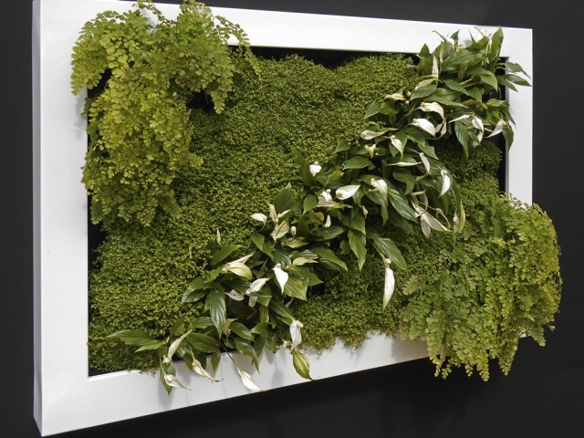 Living Wall Picture Frame